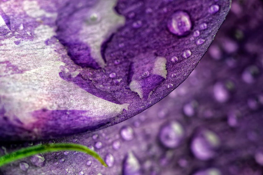 Love between dripping and flowers - macro photography (10)
