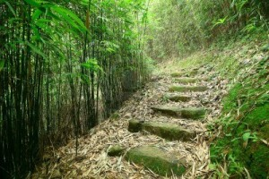 green-forest-bamboo